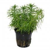 Растения (живые)