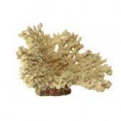 Кораллы натуральные