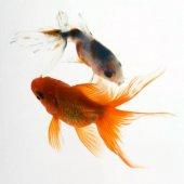 Рыбки и др.
